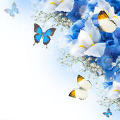 Flowers and butterfly, blue hydrangeas and white irises — Стоковое фото