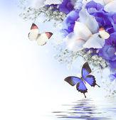 Blommor och fjäril, blå hortensior och vit iris — Stockfoto