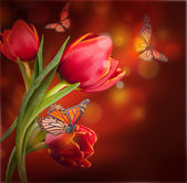 Flowers & butterflies — Stock Photo