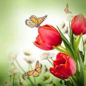 Flowers & butterflies — Stock Photo