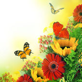 Autumn flowers, bouquet from gerber and butterfly — Stock Photo