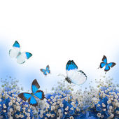 Flowers in a bouquet, blue hydrangeas and butterfly — Stock Photo