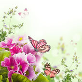 A spring primrose is in a bouquet, floral background and butterfly — Stock Photo