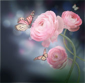 Bouquet of pink roses against a dark background butterfly — Stock Photo