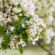 White flower on a tree in a spring garden — Stock Photo