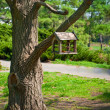 Wooden birds feeder on an old tree — Stock Photo