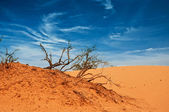 Desert of North Africa, sandy barkhans — Stock Photo