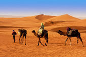 The Berbesky tribe passes the desert in Africa — Stock Photo