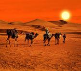 The Berbesky tribe passes the desert in Africa — Stock Photo