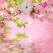 Pink flower of an Oriental cherry — Stock Photo