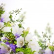 Bouquet of white and blue bells on a white background — Stock Photo