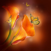 Multi-colored lilies and the butterfly on a dark background — Stock Photo