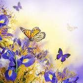 Bouquet of blue irises, white flowers and butterfly — Stock Photo