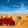 Stock Photo: Tourist camel