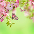 Oriental cherry — Stock Photo