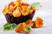 Cogumelos chanterelle — Foto Stock