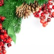 Berries and spruce branch — Stock Photo