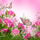 Delicate roses and butterfly — Stock Photo