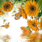 Gerbera daisies and butterfly — Stock Photo