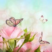 Beautiful roses and butterfly, flower, floral background — Stock Photo