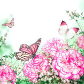 Bouquet of pink roses and butterfly — Stock Photo