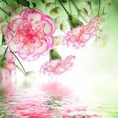 Bouquet di rose rosa — Foto Stock