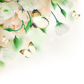 Bouquet of white roses and butterfly — Foto de Stock