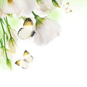 Bouquet of white roses and butterfly — Stock Photo