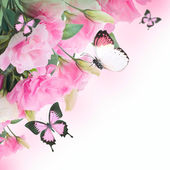 Bouquet of pink roses and butterfly — Foto Stock