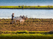 The farmer plows the land ancient method — Stockfoto