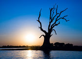 Lonely tree on a river in Myanmar — Photo