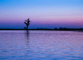 Lonely tree on a river in Myanmar — Stock Photo