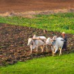 Farmer in the field — Stock Photo #38648781