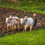 Farmer in the field — Stock Photo #38648787