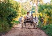 Labourer les champs de riz — Photo