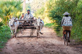 Plowing rice fields — Stock Photo