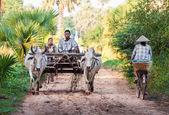 Plowing rice fields — Stock Photo