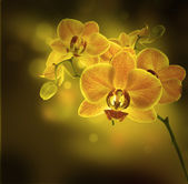 Tropical orchids — Stock Photo