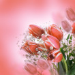 Tulips bloom — Stock Photo #38922509