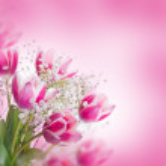Tulips bloom — Stock Photo #38922553