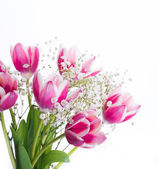 Tulips floral background. — Stock Photo
