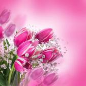Tulpen bloeien — Stockfoto