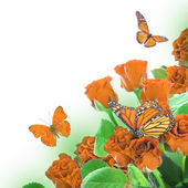 Floral background and butterfly — Stockfoto