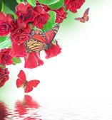 Floral background und schmetterling — Stockfoto
