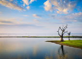 Lonely tree on a lake in Myanmar — Stock Photo