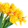 Stockfoto: Yellow tulips
