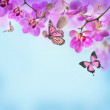 Floral background of tropical orchids and butterfly — Stock Photo
