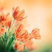 Tulipanes rojos con hierba verde — Foto de Stock