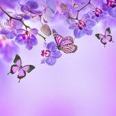 Blumenhintergrund von tropischen orchideen und schmetterling — Stockfoto