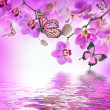 Tropical orchids and butterfly — Stock Photo #40950159